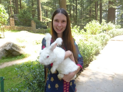 jess angora rabbit